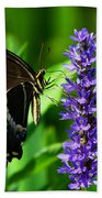 Palamedes Swallowtail Butterfly Bath Towel