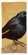 Pale-winged Starling Bath Towel