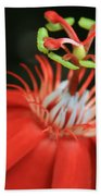Passiflora Vitifolia - Scarlet Red Passion Flower Bath Towel