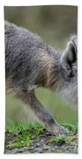Patagonian Cavy Youngin Bath Towel