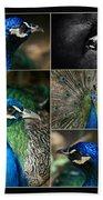 Pavo Cristatus IIi The Heart Of Solitude  - Indian Blue Peacock  Bath Towel
