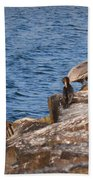 Pelican And Cormorants Bath Towel