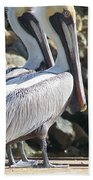 Pelicans Of Keaton Beach Canal Bath Towel