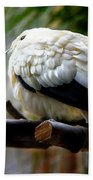 Pied Imperial Pigeon Bath Towel