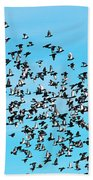 Pigeon Flight Bath Towel