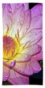 Pink And Yellow Waterlily Bath Towel