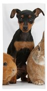 Pinscher Puppy With Rabbit And Guinea Bath Towel