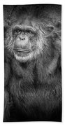 Portrait Of A Chimpanzee Bath Towel