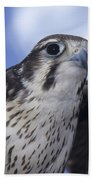Prairie Falcon In Flight Bath Towel