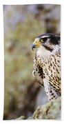Prairie Falcon On Rock Ledge Bath Towel