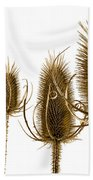 Prickly Teasels On White Bath Towel