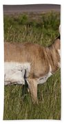Pronghorn Male Custer State Park Black Hills South Dakota -1 Bath Towel