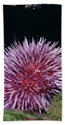Purple Sea Urchin Feeding California Bath Towel
