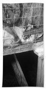 Rabid Fox, 1958 Bath Towel