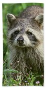 Raccoon Looking For Lunch Bath Towel