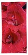 Red Gladiolus Hand Towel