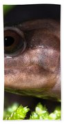 Red Hills Salamander Bath Towel