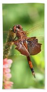 Red Saddlebag Dragonfly In The Marsh Bath Towel