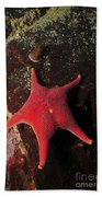 Red Sea Star And Limpet On Brown Rock Bath Towel