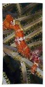 Red Seahorse On Caribbean Reef Bath Towel