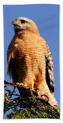 Pismo Beach Red Shoulder Hawk Bath Towel