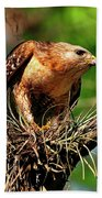 Red-shouldered Hawk With Breakfast Hand Towel