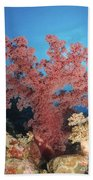 Red Soft Coral,  Australia Bath Towel