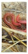Red Soil Centipede - Strigamia Bath Towel