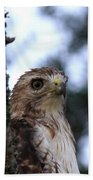 Red-tailed Hawk - Hawkeye Bath Towel