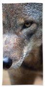Red Wolf Closeup Bath Towel