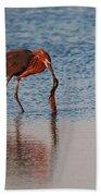 Reddish Egret Checking It Out Bath Towel