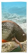 Redlip Parrotfish Bath Towel
