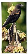 Redwinged Blackbird II Bath Towel