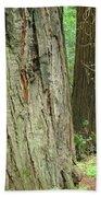 Redwood Trees Art Prints Big California Redwoods Bath Towel