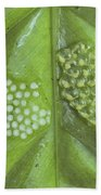 Reticulated Glass Frogs And Eggs Bath Towel