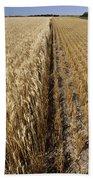 Ripened Wheat And Stubble In Saskatchewan Field Bath Towel
