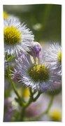 Robin's Plantain - Alabama Wildflowers Bath Towel