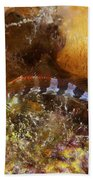 Saddled Blenny, Bonaire, Caribbean Bath Towel