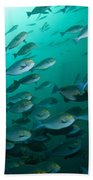 School Of Yellow Masked Surgeonfish Bath Towel
