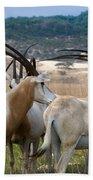 Scimitar-horned Oryx Bath Towel