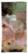 Scorpionfish, Indonesia Bath Towel