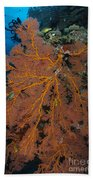 Sea Fan, Fiji Bath Towel