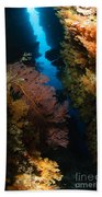 Sea Fans, Fiji Bath Towel