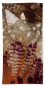Sea Snails Laying Eggs On Top Of A Fire Bath Towel