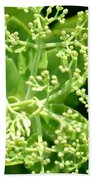 Sedum Droplets Hand Towel