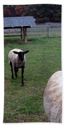 Sheep Feed Time Bath Towel