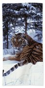 Siberian Tiger Lying On Mound Of Snow Hand Towel