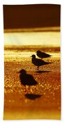 Silver Gulls On Golden Beach Hand Towel
