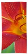 Single Red Lily Closeup Bath Towel