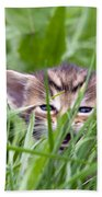 Small Kitten In The Grass Bath Towel